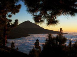 Trip around the island and visit of Teide