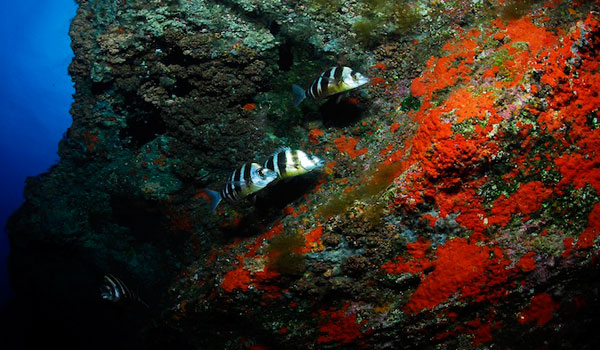 Fish in El Hierro
